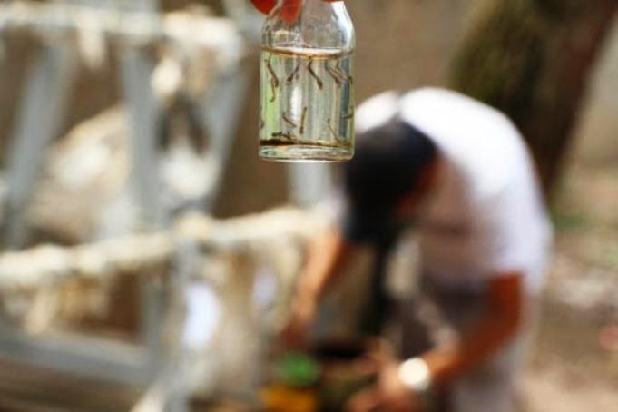 Dengue: Segundo levantamento de densidade larvária do ano identifica criadouros em residências