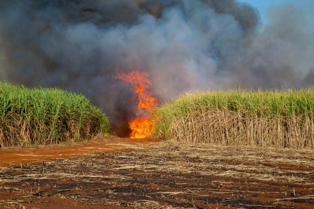 TEMPO SECO: Incêndio atinge fazenda em Descalvado, moradores se mobilizam para controlar as chamas