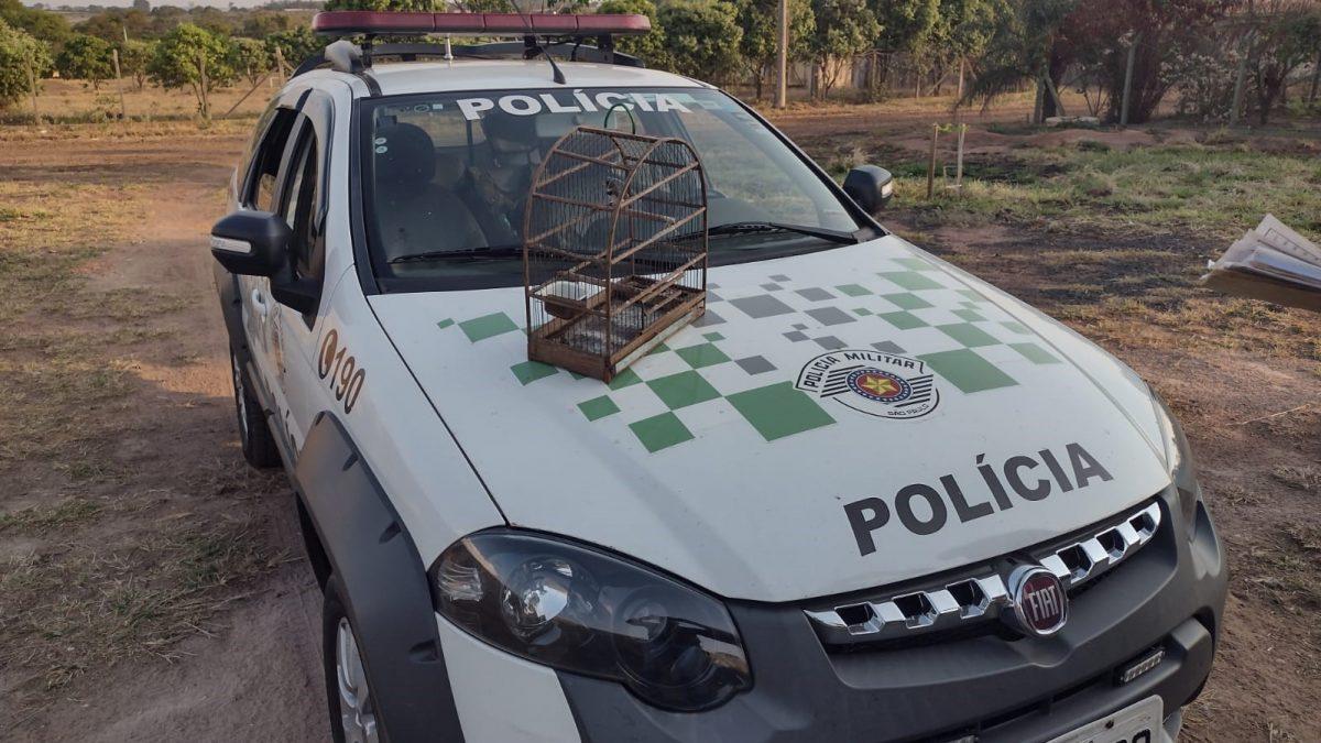 Em parceria com a Divisão Municipal de Fiscalização Ambiental, Polícia Ambiental resgata aves silvestres mantidas em cativeiro e aplica 4 multas em Descalvado